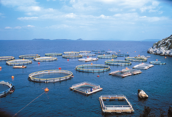 Yunanistan'da bir entansif balık çiftliği