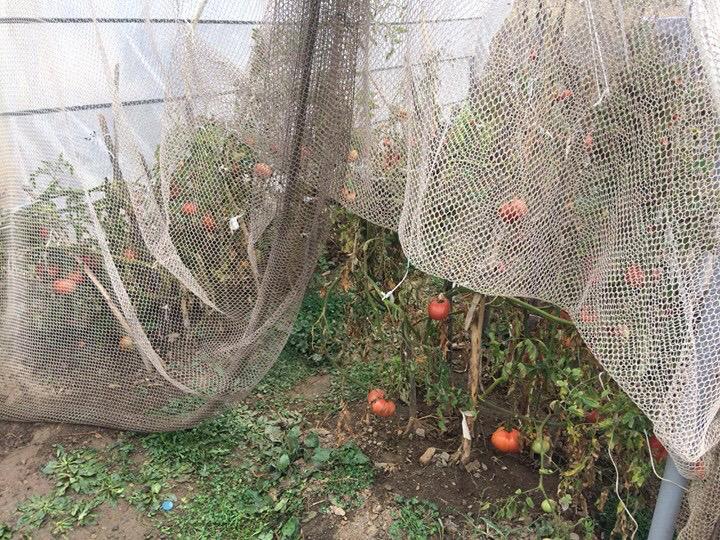 ©Serço Ekşiyan | Erzincan'da sera örtüsü olarak kullanılan ağ