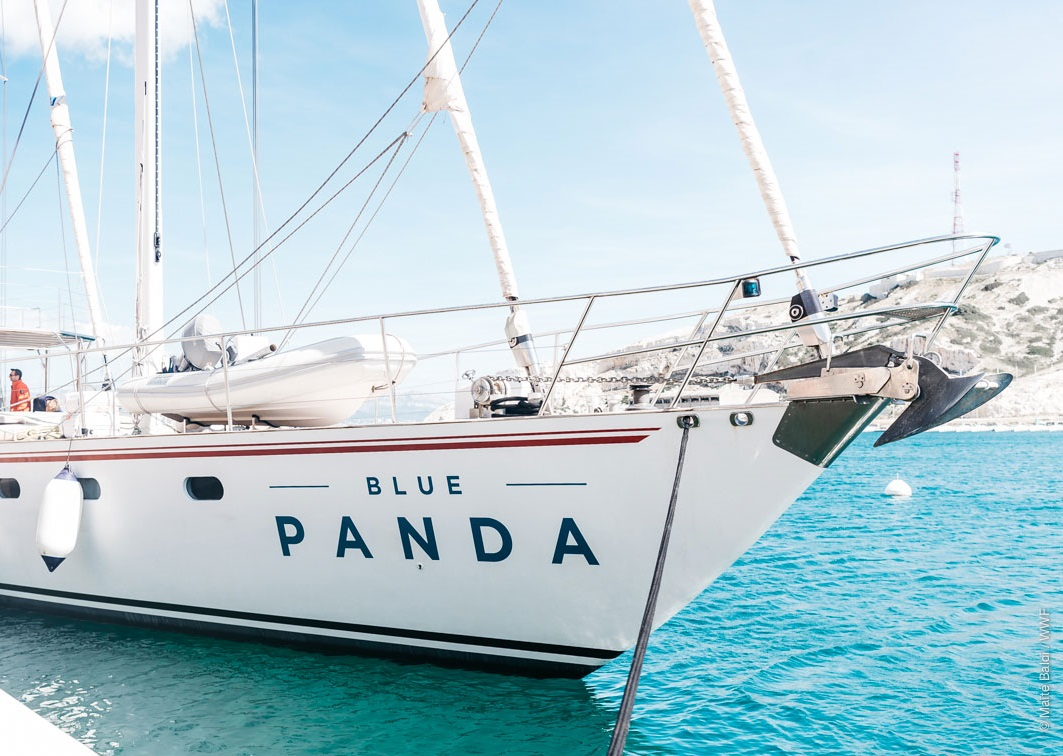 blue-panda-news