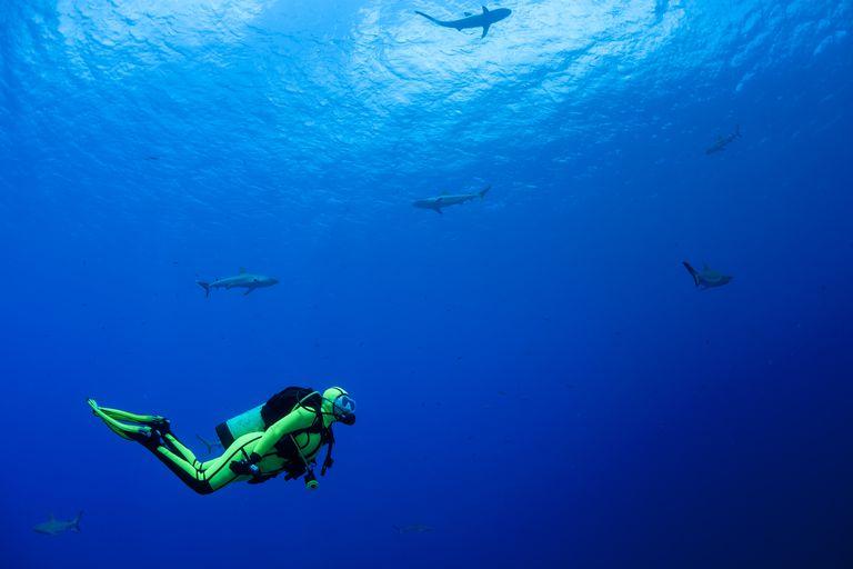 oceania--micronesia--yap--diver-with-grey-reef-sharks--carcharhinus-amblyrhynchos-535650995-59e128cb0d327a00103ae600
