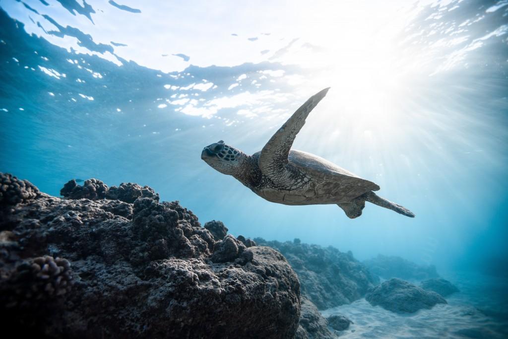 photo-of-sea-turtle-2765872 (1)